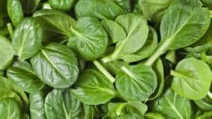 Warum Spinat gesund ist?