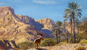 painting of israel desert
