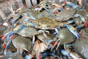 New UMD Research Could Extend Bay Crabs' Shelf Life