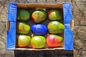 impactrack mango