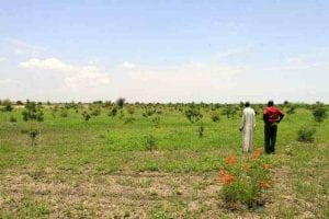 How to stop Africa desertification? A great green wall dedicated to sustainable agriculture, reservoirs, and energy plants