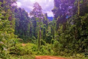 Trees and Green Jungle around Sorong
