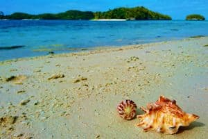 Two shells on a beach in Raja Ampat