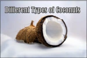 Types of Coconuts