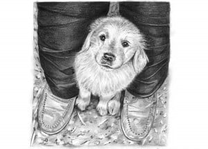 Pencil Drawing of Golden Retriever Puppy
