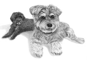 Pencil Portrait of Two Dogs