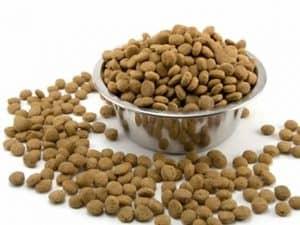 healthiest dog food