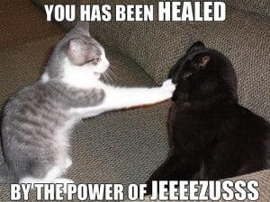 gato-salvador