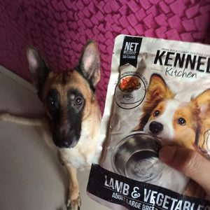 WoofBox Blog - Feed your pet right, Why is it important?