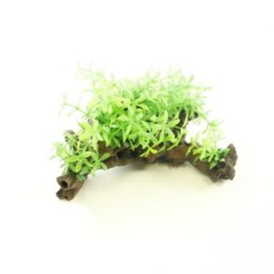 Aquarium Tree Root with Plants