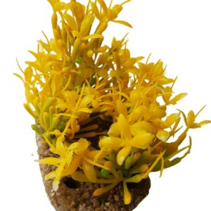 Green & Yellow Plant With Sand Base