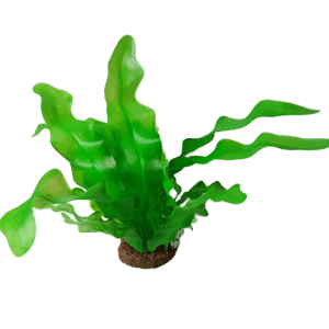 Betta 10'' Green Sea Lettuce Plastic Plant With Sand Base