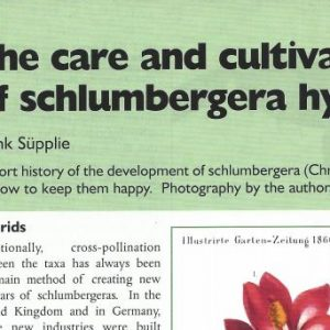 Paper digital: The care and cultivation of Schlumbergera