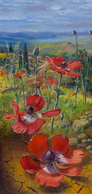 poppy flowers israel