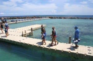 Dolphin Swim, Dolphin Cove Jamaica, Dolphin Cove, Ocho Rios, Jamaica