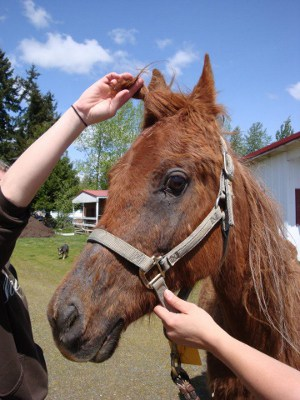 Scandal Rocks Washington Horse Rescue