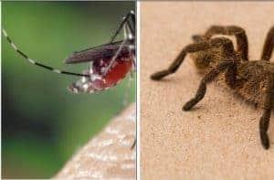 Spider Bite vs Mosquito Bite