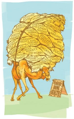 Camel burdens