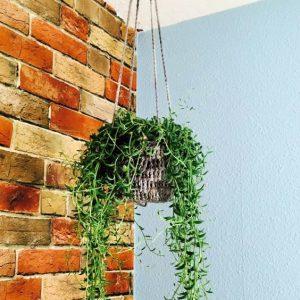 diy crochet plant hanger