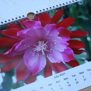 2021 Epiphyllum Calender