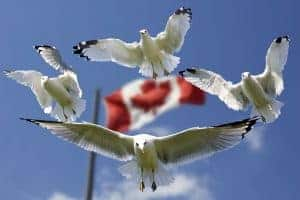 Canada flag and birds