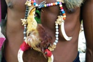 Colorful necklace with bones, teeth and bird of paradise of head of the village