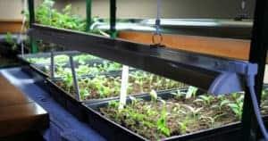 Best indoor Grow Lights For Seedlings To Ensure Rapid, Healthy Growth Of Your Seedlings