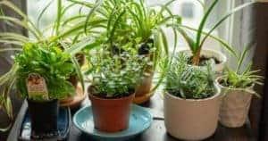 12 Best Indoor Herb Garden Planters To Grow A Kitchen Herb Garden