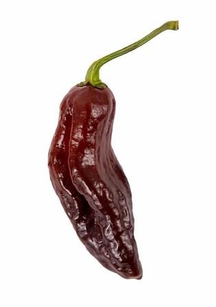 Chocolate Bhutlah Pepper