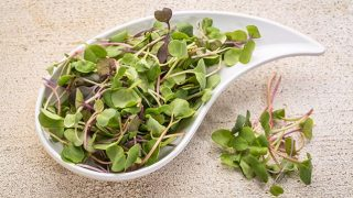How to Plant and Grow your own Microgreens
