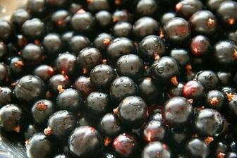 Black currant seed oil properties