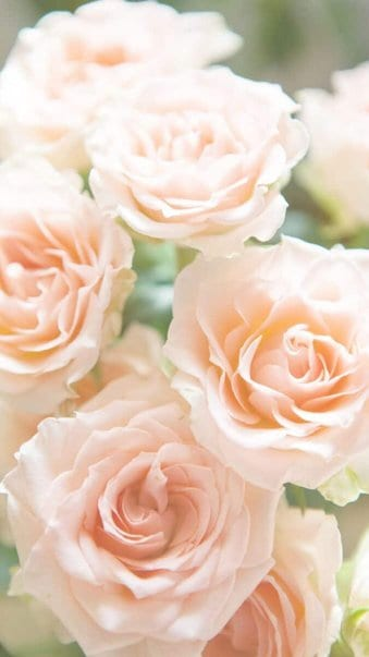 Soft pink flowers background for iPhone