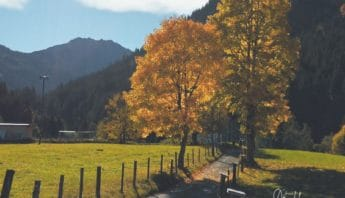 Bäume in Herbstfarben