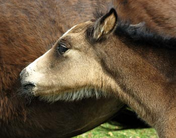 PZP Approved for Birth Control in Wild Horses