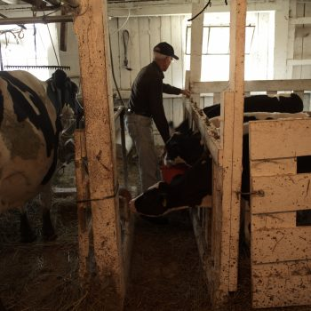 Dairy Farmer Relief Campaign to Launch at Farm Aid