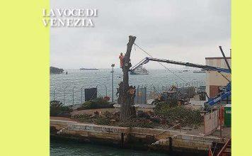 albero tagliato ancora alla marittima venezia nostra 600