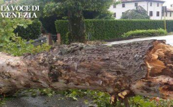 Maltempo oggi pomeriggio: alberi devastati nel veneziano
