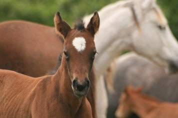 Judge Tells AQHA to Register Clones