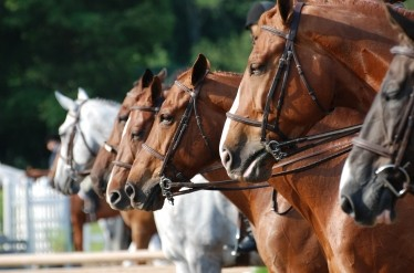 Overcoming Consignment Horse Challenges