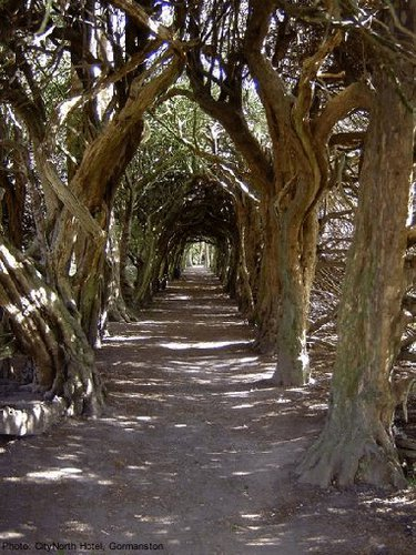 The tunnel of ewe trees to gormanston castle