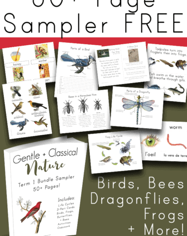 Looking for FREE printable resources for your bird, bee, dragonfly or frog study. This FREE 50 page resource will help bring your unit study together! It includes posters, worksheets, activities, and Montessori cards.