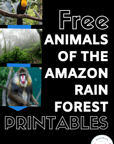 free animals of the amazon rain forest printables text with photographs of rainforest and animals.