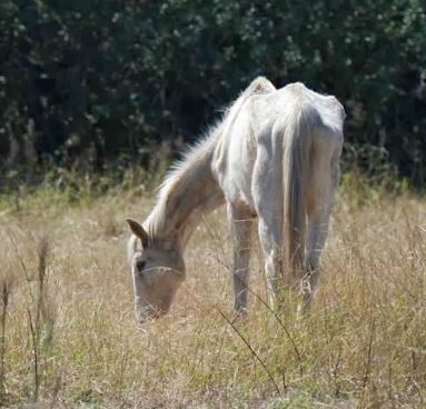 Trial Scheduled for Operators of Florida Horse Sanctuary