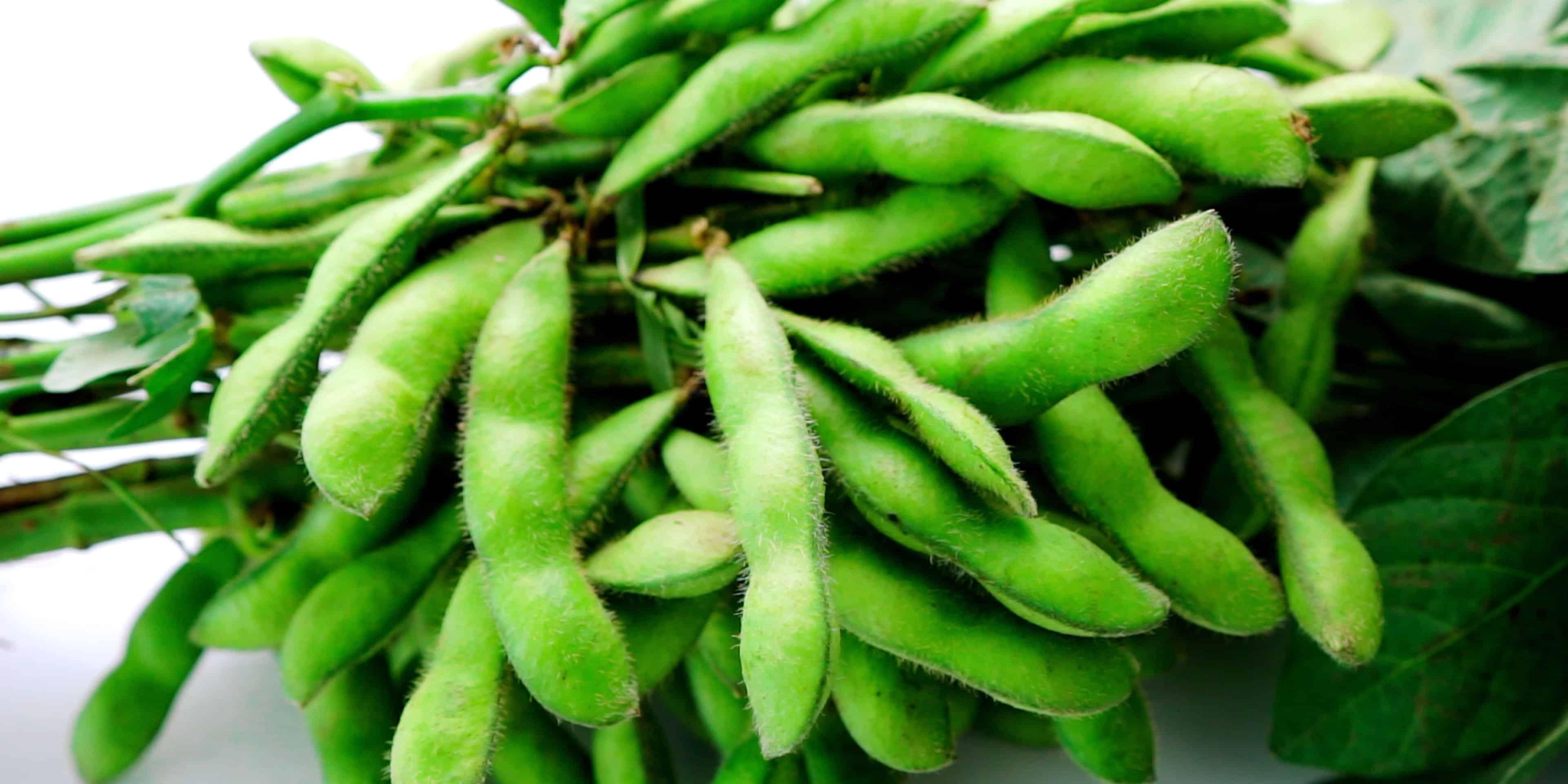 Edamame or green soybeans still on their stalks.