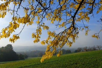 Autumn - fall, angol ősz