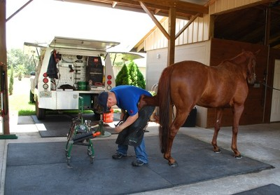 A good environment is essential for a farrier to do his job effectively. The shoeing area should be clean and dry.