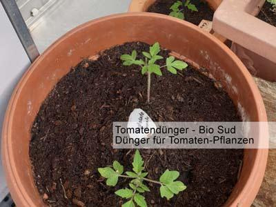Bild bzw. Dünger Bilder von Tomaten mit Tomatendünger -a