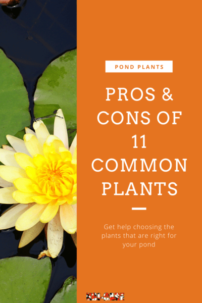 koi Pond Plants