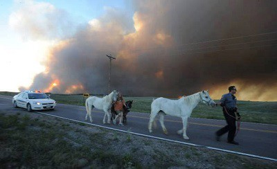 8 Natural Disaster Tips for Horse Owners