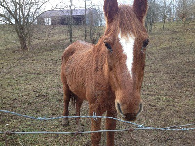Serenity Horse Rescue Director Charged with Animal Cruelty